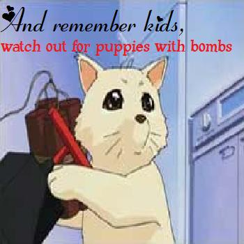 Puppies with bombs OMG!!!