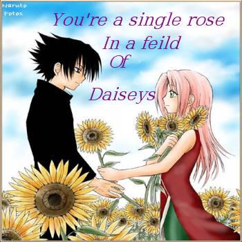 feild of daisys