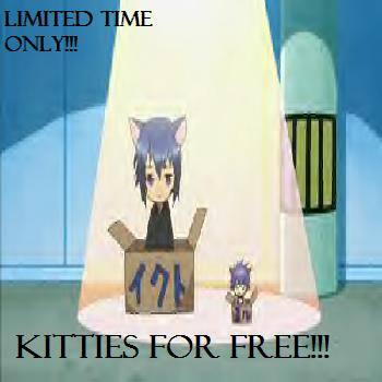 Kitty for Sale <3