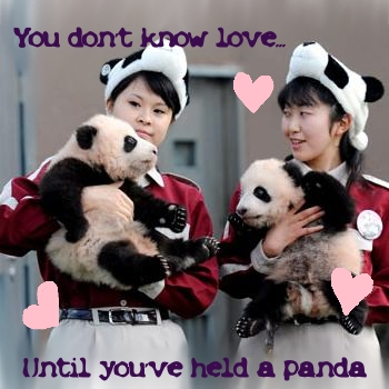 Know love... hug a panda